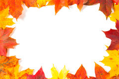Colorful autumn maple leaves Stock Photo