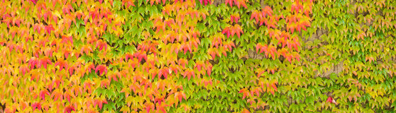 Colorful autumn maple leaves banner, panorama Stock Images