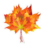 Colorful autumn maple leaves bouquet isolated on white Stock Photography