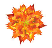 Colorful autumn maple leaves bouquet isolated on white Royalty Free Stock Image
