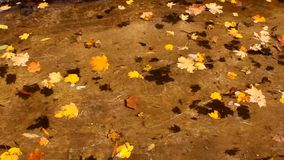 Colorful autumn leaves float on surface of transparent water. Colorful autumn maple leaves float on surface of clear water and cast shadow on bottom stock video footage