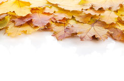 Colorful autumn maple leaves frame Stock Photos