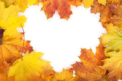 Colorful autumn maple leaves frame Royalty Free Stock Photo