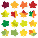 Colorful autumn maple leaves set. Isolated on white background vector illustration