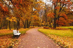 Colorful autumn maple trees fallen leaves path bench in park Stock Photo