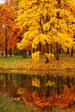 Colorful autumn maple trees in park Royalty Free Stock Photos