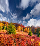 Colorful autumn morning in the Carpathian mountain forest. Stock Photo