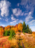 Colorful autumn morning in the Carpathian mountain forest. Stock Image