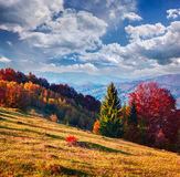 Colorful autumn morning in the Carpathian mountain forest. Stock Photos