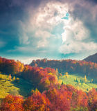 Colorful autumn morning in Carpathian mountains Stock Images