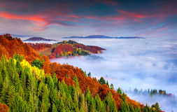 Colorful autumn morning in the Carpathian mountains. Sokilsky ri Royalty Free Stock Image