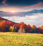 Colorful autumn morning in the Carpathian mountains. Sokilsky ri Royalty Free Stock Images