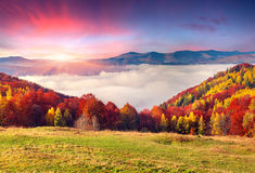 Colorful autumn morning in the Carpathian mountains. Stock Images