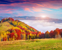 Colorful autumn morning in the Carpathian mountains. Royalty Free Stock Photography