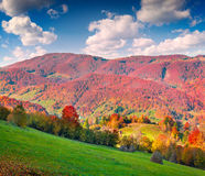 Colorful autumn morning in the Carpathian mountains Stock Image