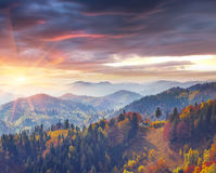 Colorful autumn morning in the Carpathians. Stock Image