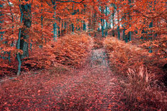 Colorful autumn morning in dark mountain forest. Royalty Free Stock Photo