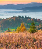 Colorful autumn morning in foggy Carpathian mountains. Colorful autumn morning in the foggy Carpathian mountains stock photography