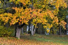 Free Colorful Autumn Morning In Lithuania.Old Park Royalty Free Stock Images - 201144869