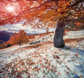 Colorful autumn morning in mountain forest Royalty Free Stock Photo
