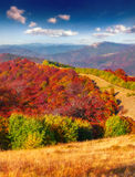 Colorful autumn morning in the mountains Stock Photography