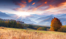 Colorful autumn morning in the mountains Stock Image