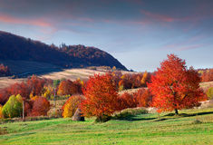 Colorful autumn morning in the mountains Royalty Free Stock Photo