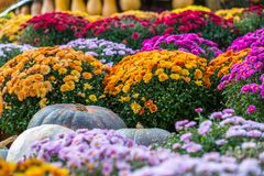 Colorful autumn in Moscow city, Russia. stock images