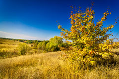Colorful autumn motif. Nice view. Stock Photo
