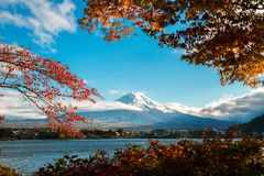 Mount Fuji in Autumn Color, Japan. Colorful Autumn in Mount Fuji, Japan - Lake Kawaguchiko is one of the best places in Japan to enjoy Mount Fuji scenery of Royalty Free Stock Photos