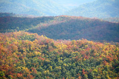 Colorful autumn mountain Stock Photos