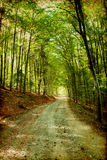 Colorful autumn in the mountains. Vintage photo of curving road in autumn forest Stock Images