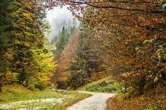 Colorful autumn in the mountains. Colorful autumn picture of a rocky road in Zarnesti, Prahova Valley, Romania Stock Image