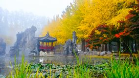 Colorful autumn at Nami island, South Korea. Colorful autumn with yellow ginkgo tree and korean style pavilion at Nami island, South Korea royalty free stock photography