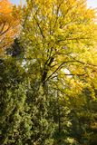 Colorful autumn. Natural autumnal background, colorful tree foliage, beautiful trees in the park in autumn Stock Images