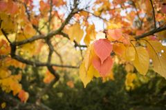 Colorful autumn. Natural autumnal background, colorful tree foliage, beautiful trees in the park in autumn Stock Photos
