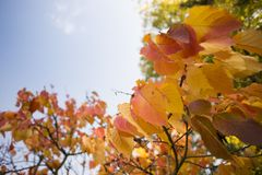 Colorful autumn. Natural autumnal background, colorful tree foliage, beautiful trees in the park in autumn Stock Image