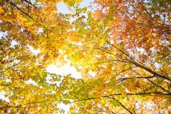 Colorful autumn. Natural autumnal background, colorful tree foliage, beautiful trees in the park in autumn Royalty Free Stock Photography