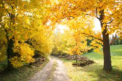 Colorful autumn Royalty Free Stock Photos