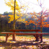 Colorful Autumn on the nature Royalty Free Stock Images