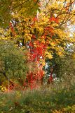 Autumn in a variety of colors Royalty Free Stock Photo