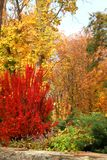 Autumn in a variety of colors Royalty Free Stock Image