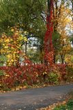 Autumn in a variety of colors Stock Photos