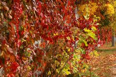 Autumn colors of nature Royalty Free Stock Images