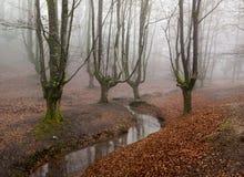 Otzarreta forest in gorbea natural park, basque country. Spain. Colorful autumn at otzarreta forest in gorbea natural park, basque country. Spain royalty free stock images