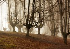 Otzarreta forest in gorbea natural park, basque country. Spain. Colorful autumn at otzarreta forest in gorbea natural park, basque country. Spain stock photos