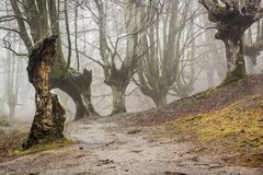 Otzarreta forest in gorbea natural park, basque country. Spain. Colorful autumn at otzarreta forest in gorbea natural park, basque country. Spain royalty free stock photos