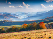 Colorful autumn panorama of the mountains. Stock Photos