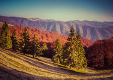 Colorful autumn panorama of the mountains Royalty Free Stock Photos
