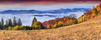 Colorful autumn panorama of the mountains. Stock Image